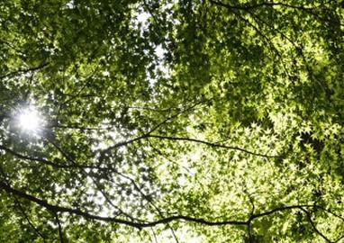 リサイクル可能 ~環境に優しいエコ素材~